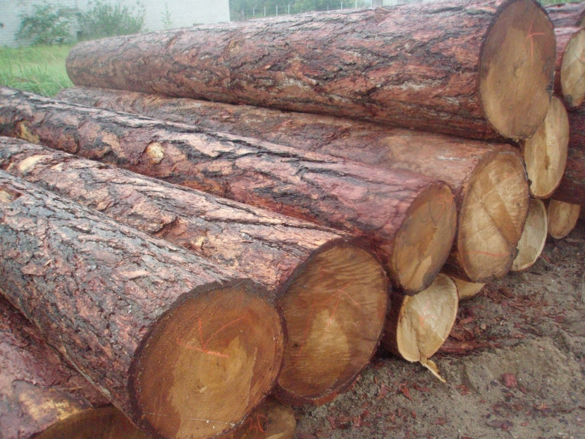 Legno grezzo di larice siberiano uab wood market - Vendita tavole di legno ...